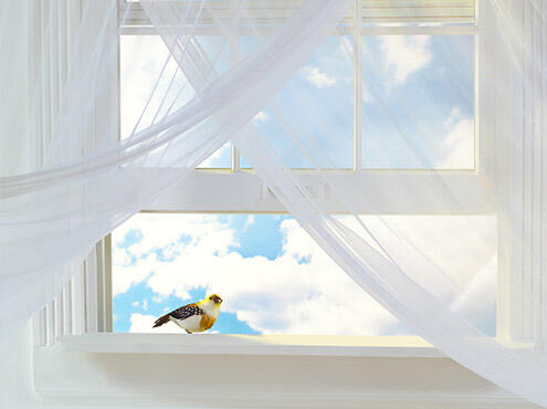 Image of a bird on a windowsill Indoor air quality